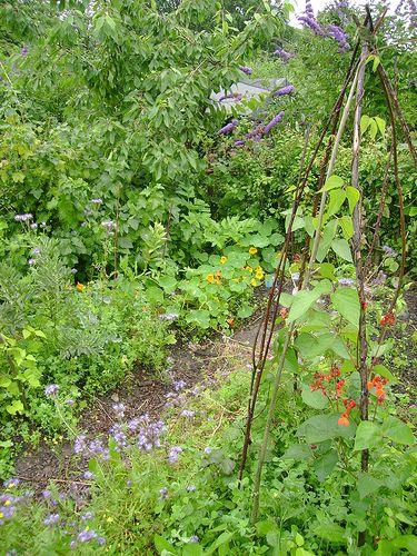 What Is Permaculture | Permaculture, London garden, Veg garden