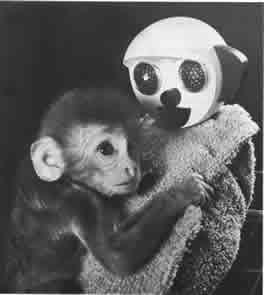 advantages of harlow monkey study For interesting monkey facts you'll  60 interesting facts about monkeys by  scientist harry harlow subjected baby monkeys to horrific experiments in.