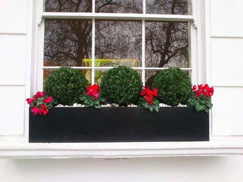 For A Classic Winter Display That S Never Going To Go Out Of Style Plant A Trio Of Clipped Dwarf Engl Window Box Flowers Window Box Plants Winter Window Boxes