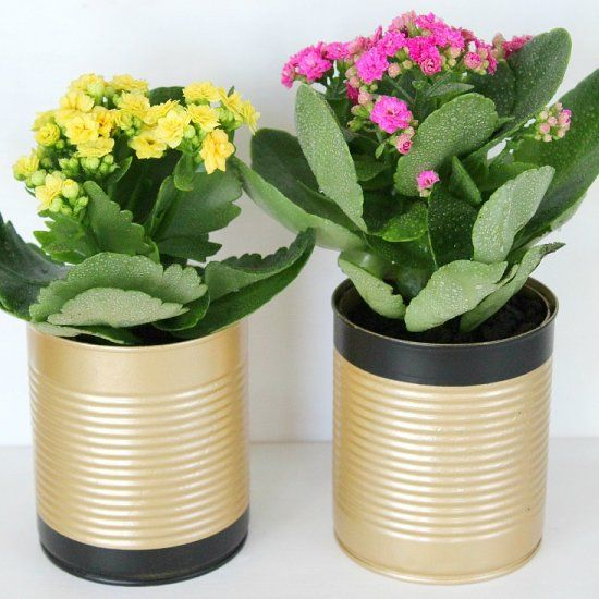 Instead of throwing away your tin cans, why not recycle them into something pretty and useful like some flower pots.