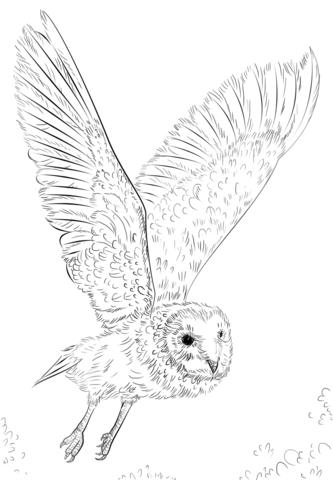 Lechuza Común en Vuelo Dibujo para colorear | pájaros y aves | Pinterest