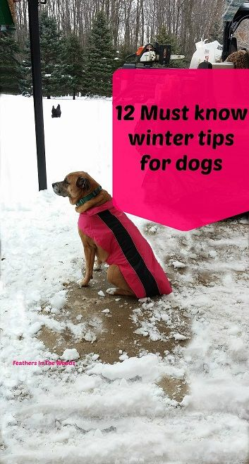 Must Know Winter Tips For Dogs Cold Weather Dogs Dogs Winter Hacks