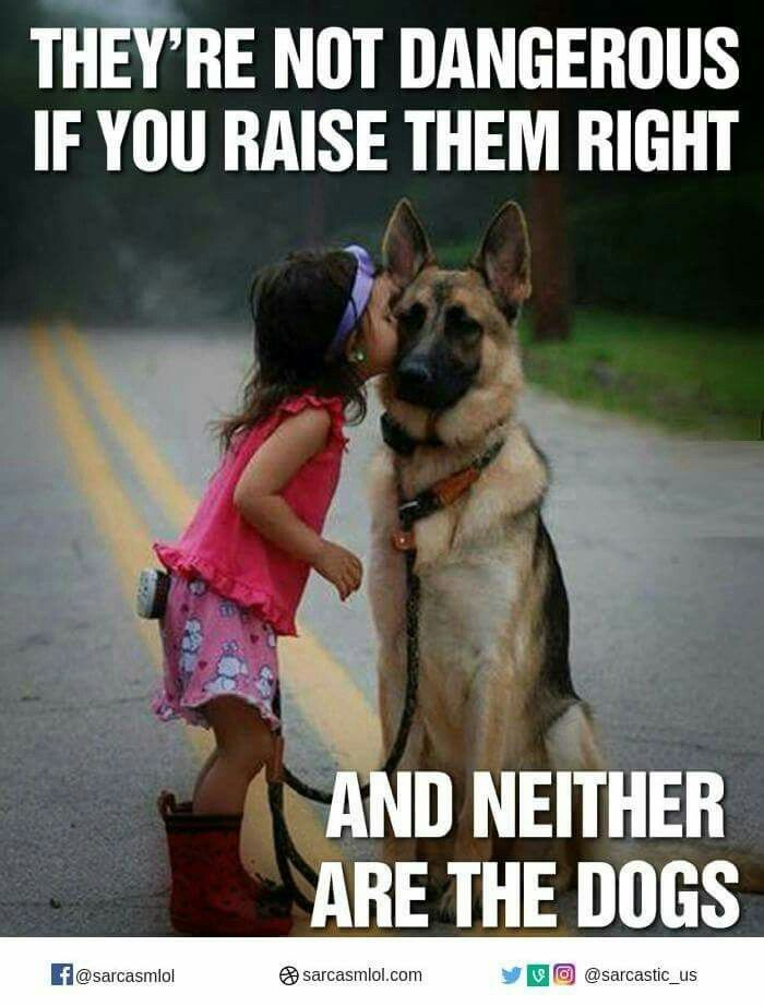 I Love This Post German Shepherd Funny Funny Animal Pictures