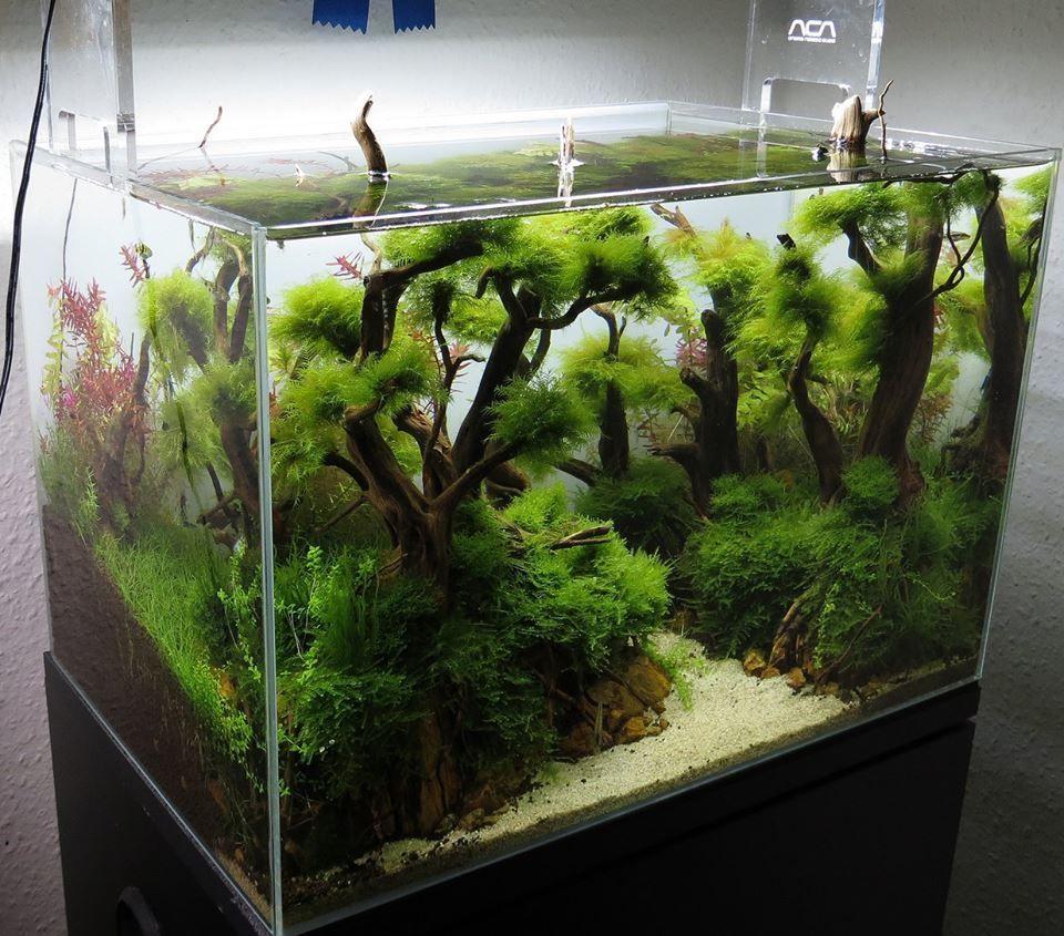 Seachem tidal filtro de cascada para acuarios aquariums and betta