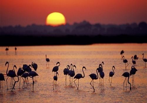 Living Report: dimezzata la fauna globale