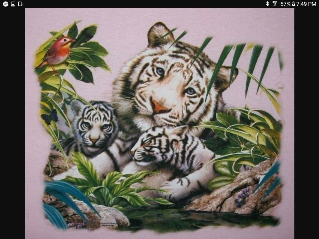 Pin By Myra Guzman On White Tigers