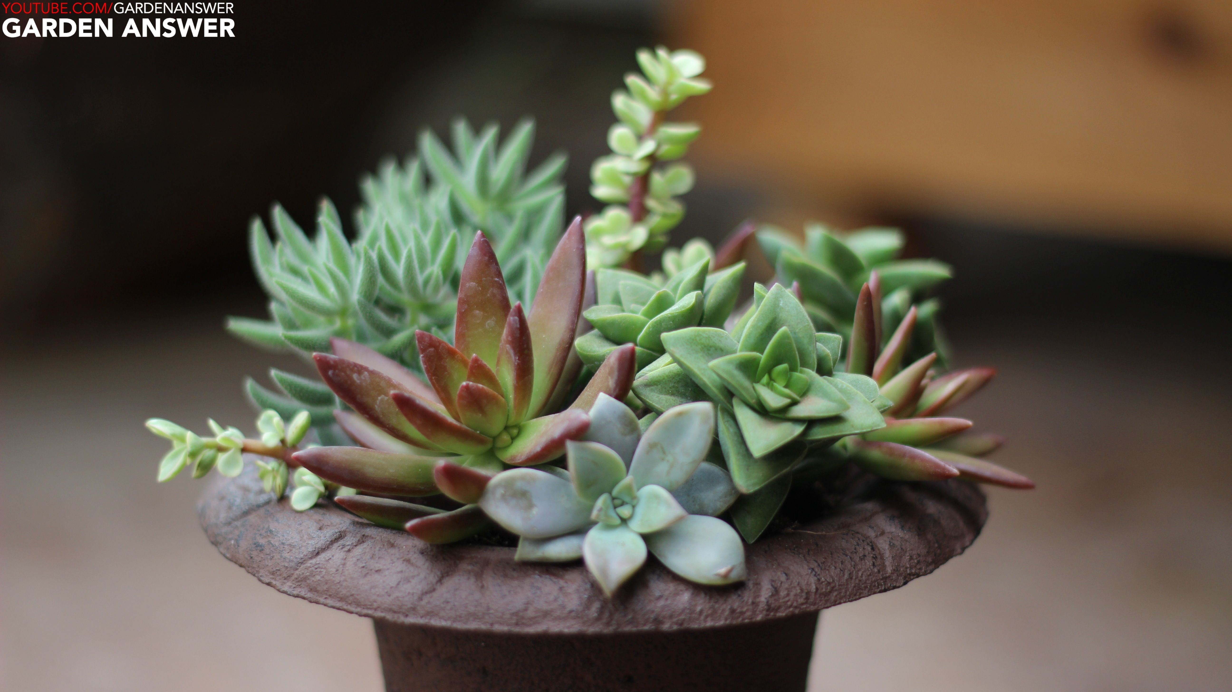Succulent Urn I Love This Combo Www Youtube Com Gardenanswer Www