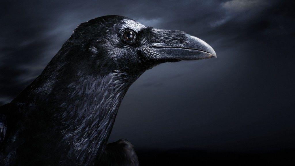 1920x1080 Wallpaper HD 12 Download Crow, Raven, Bird