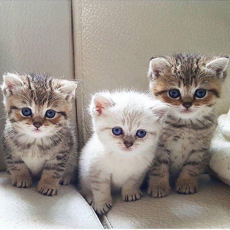 1 817 次赞 92 条评论 Everything About Fashion Beautifuldegirl 在 Instagram 发布 Lovely Cat Yes Or No Leave Your Comment Tap Cute Cats Cute Animals Kittens Cutest