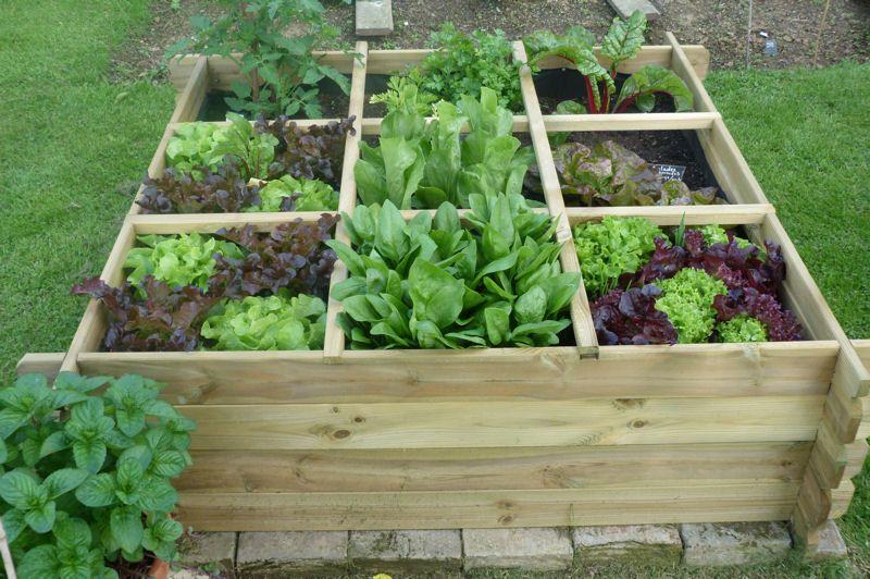 Salades et aromatiques en tout genre carr potager et - Jardins en carre ...