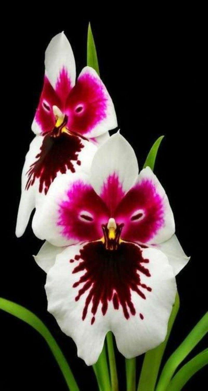 L 39 orchid e rare la plus bizarre ou quand les orchid es for Les plus belles plantes artificielles