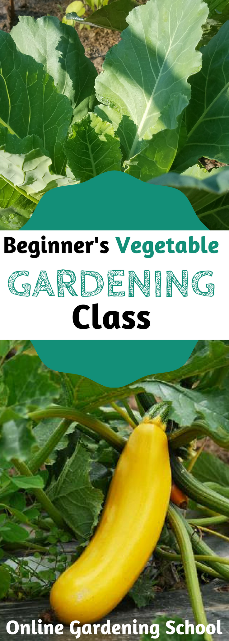 Ad Beginners Guide To Vegetable Gardening Learn From Rick Stone Who Has Been Gardening