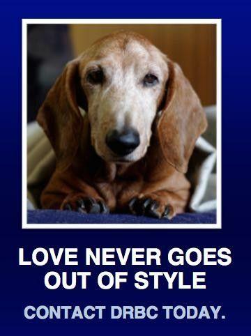 Pin by Jamie Keaton on Doxie Love Dog adoption