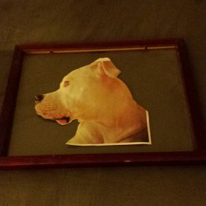DIY Tutorial: Framed Pet Silhouette on Fabric