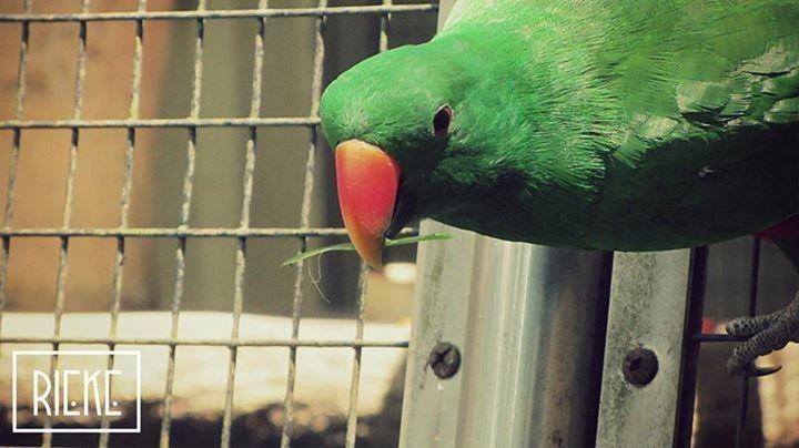 <3 parrot