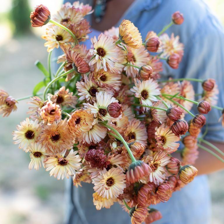 Calendula Officinalis P*T Marigold Growing Benefits 400 x 300