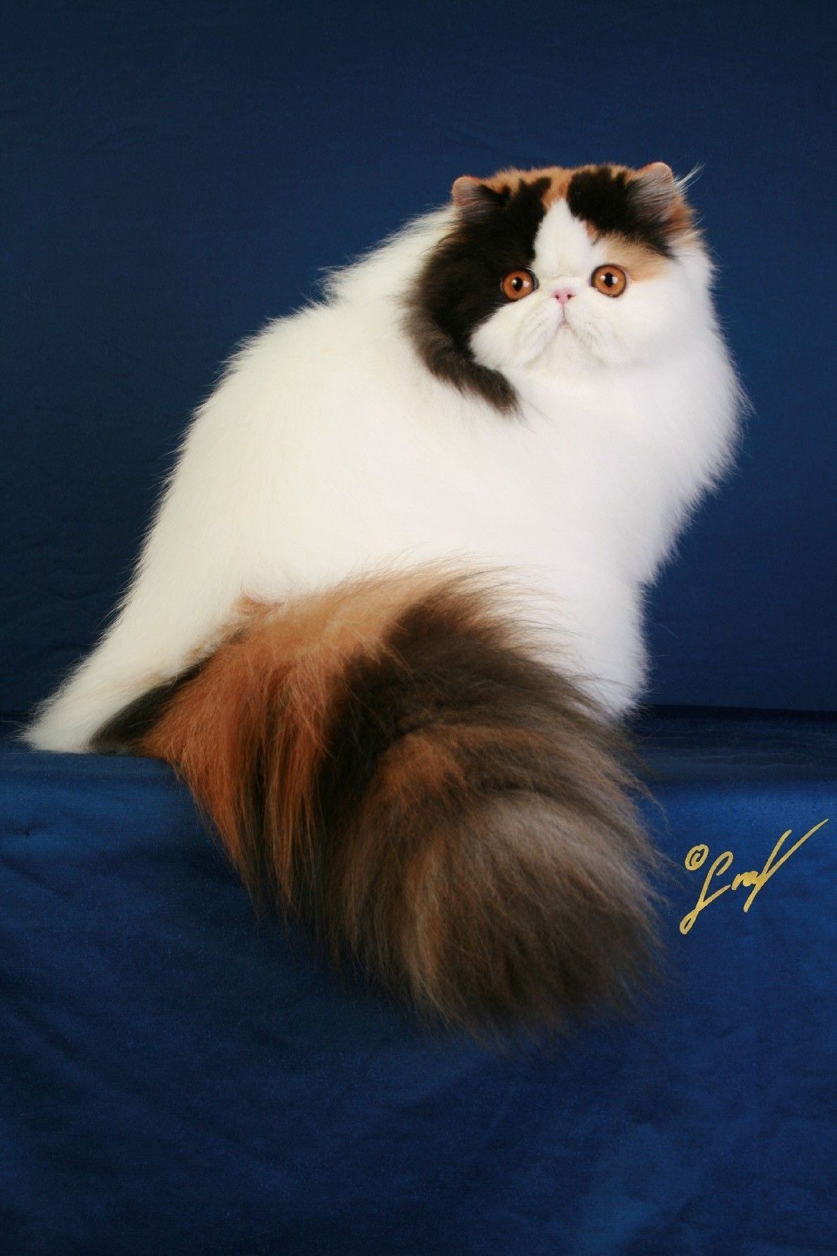 Not To Be Missed Cat Ideas and Training Tips Cute cats