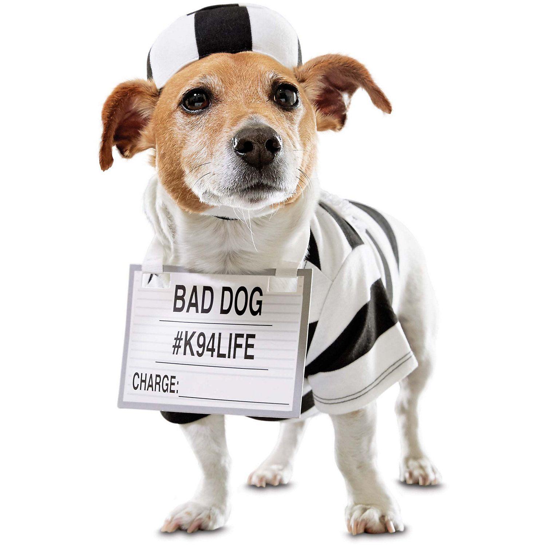 Jailbird Dog Costume Pinned by www.thedapple.com