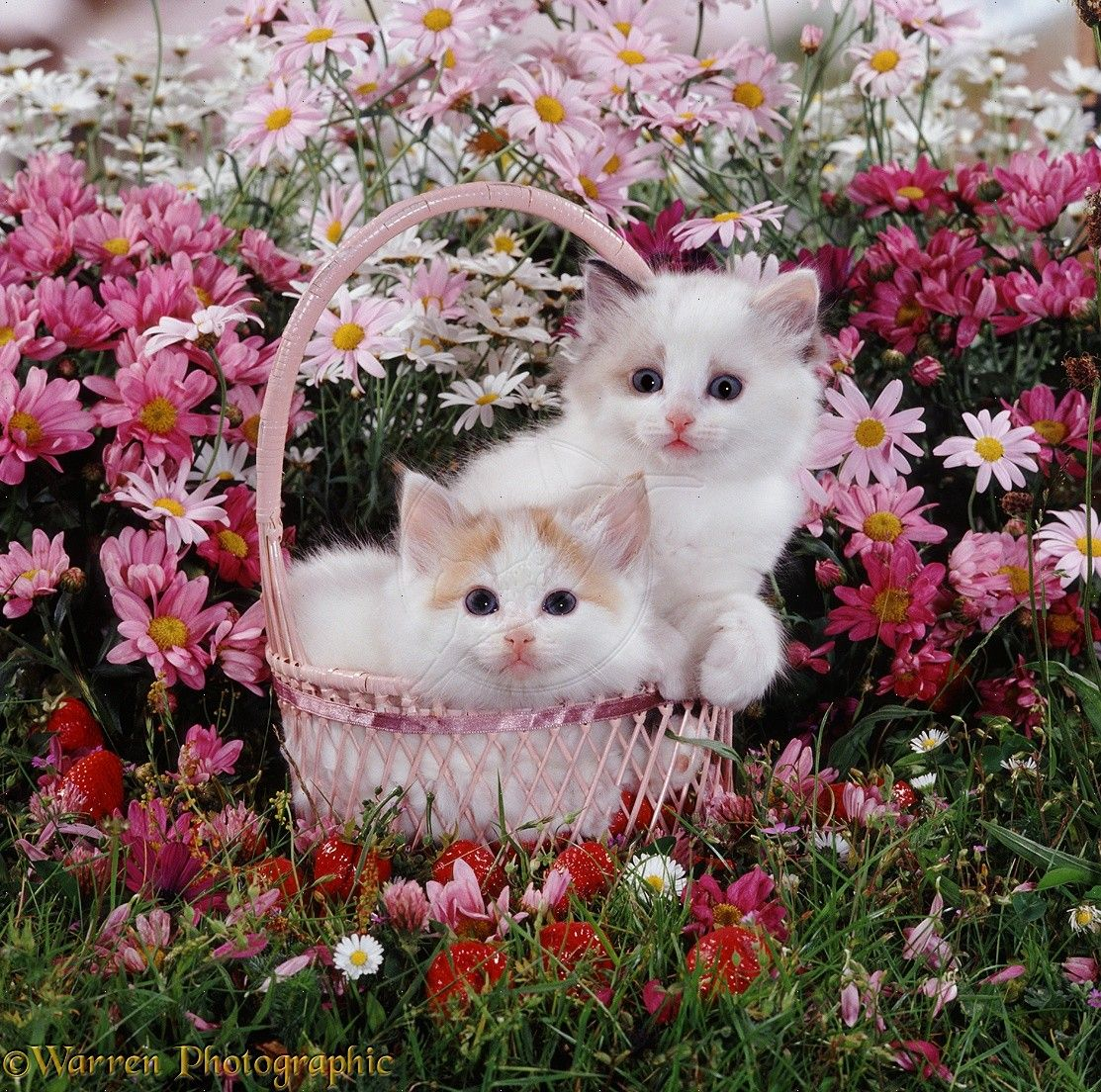 basket of flowers kittens in a strawberry basket