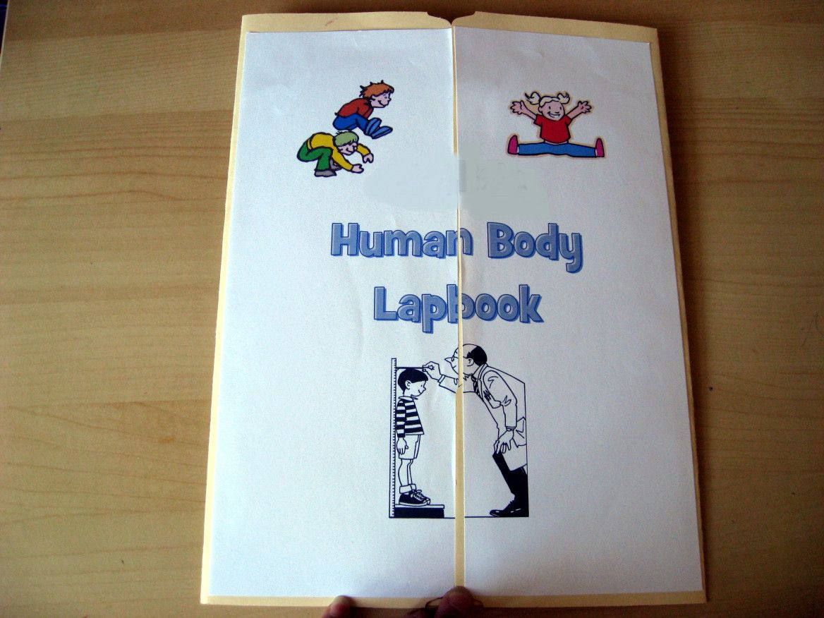 I Put Together A Human Body Lapbook For My 2 Year Old Girl