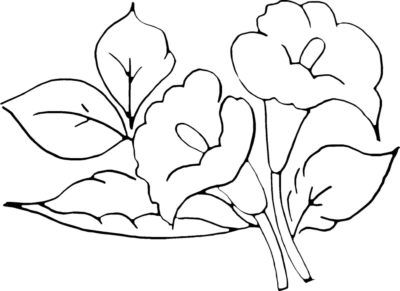 pinterest flores | fotos de flores para pintar - fotos de flores ...