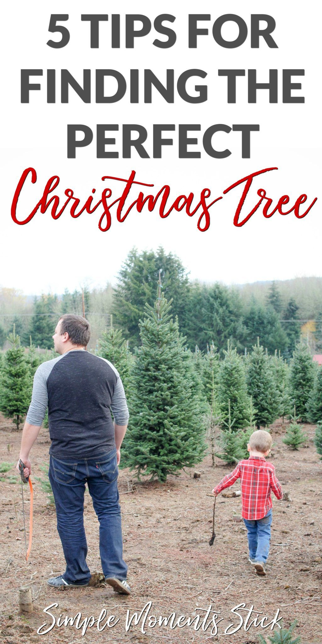 How To Find The Perfect Christmas Tree Simple Moments Stick Simplifying Motherhood Simple Christmas Tree Types Of Christmas Trees Winter Family Activities