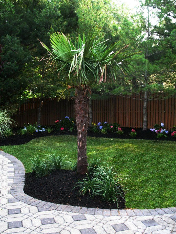 Poolside Palm Tree Can Give Any Pool That Tropical Feel
