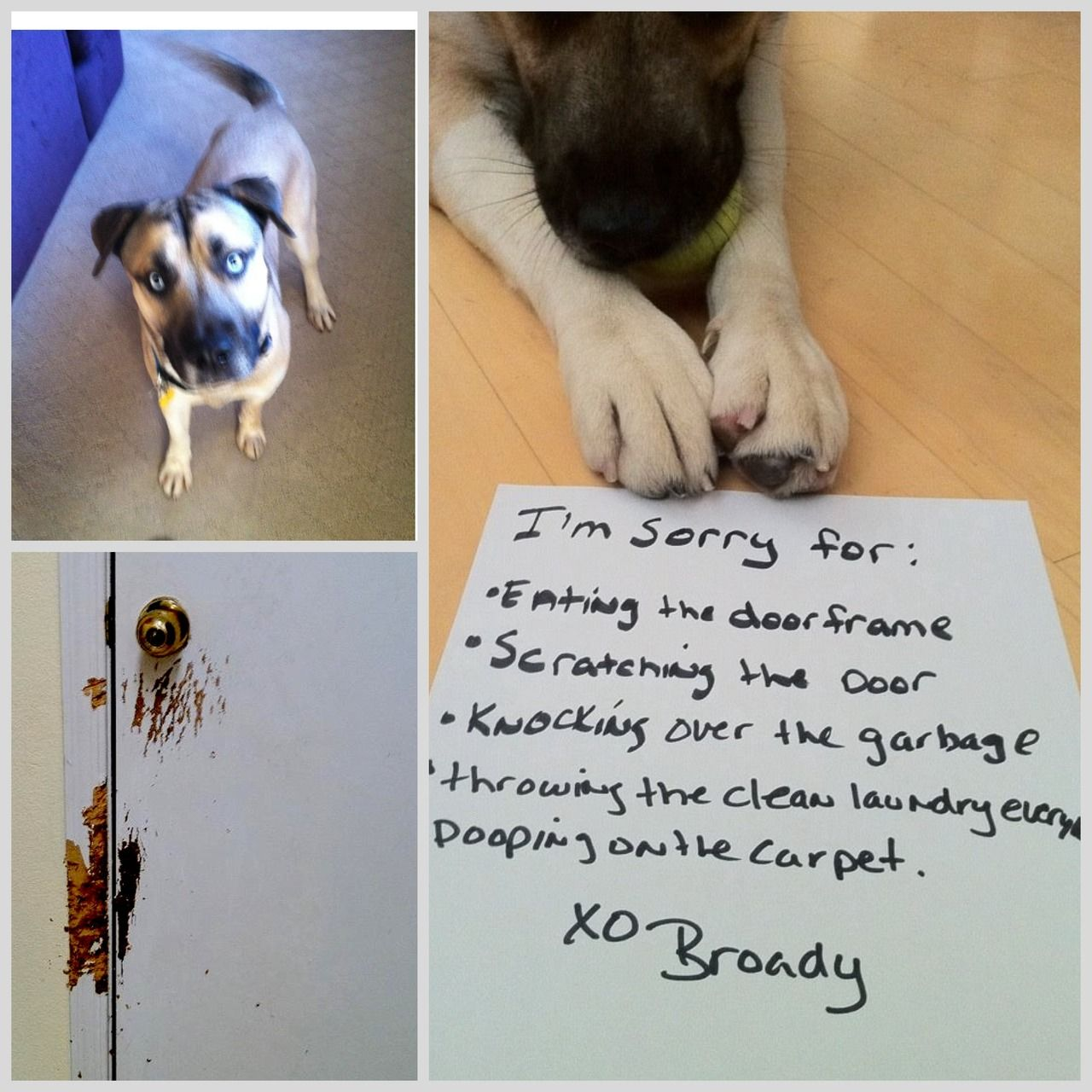 While In Timeout Broady Wrote The Following Apology Letter: Im Sorry For:  Eating The Door Frame Scratching The Door Knocking Over The Garbage  Throwing The ...