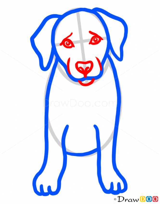 how to draw puppy labrador retriever dogs and puppies drawing