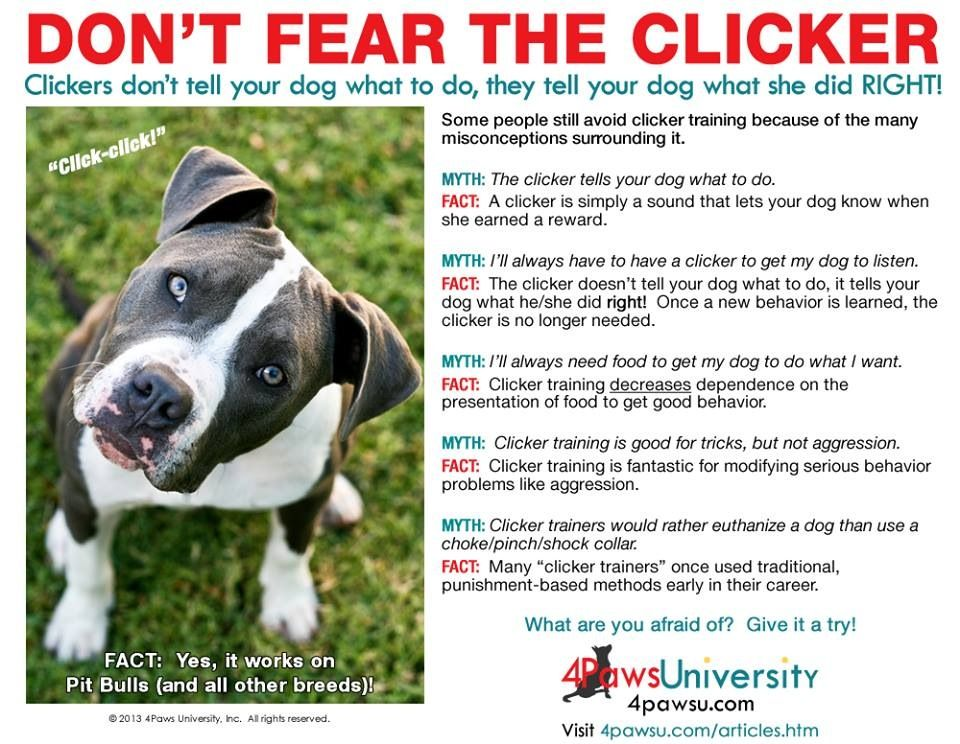 Don T Fear The Clicker Dog Training Advice Positive Dog