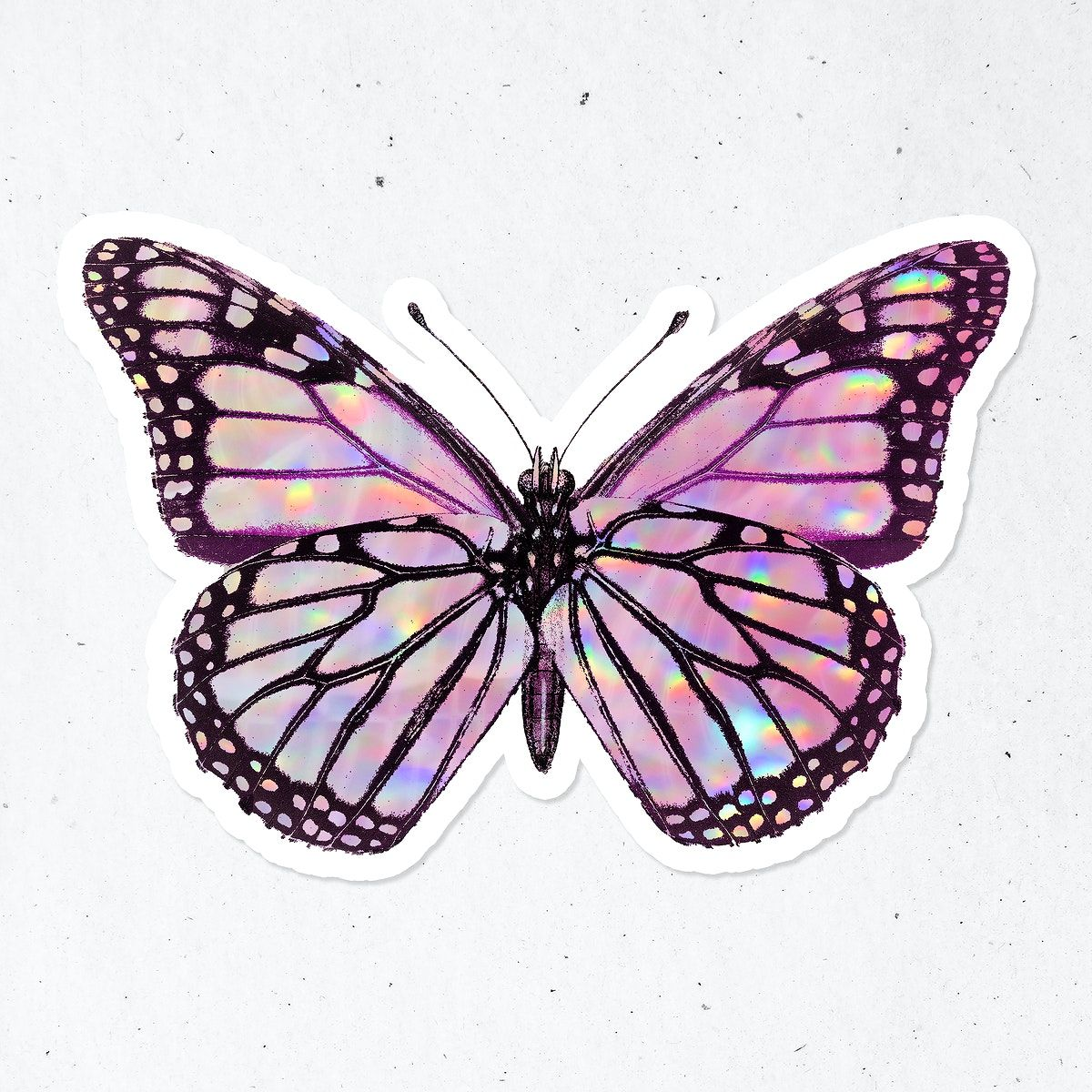 Pink holographic Monarch butterfly with a white border sticker | premium image by rawpixel.com / nunny