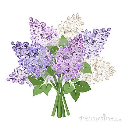 Lilacs Stock Illustrations 109 Lilacs Stock Illustrations Vectors Clipart Flower Drawing Lilac Flowers Vintage Flower Tattoo
