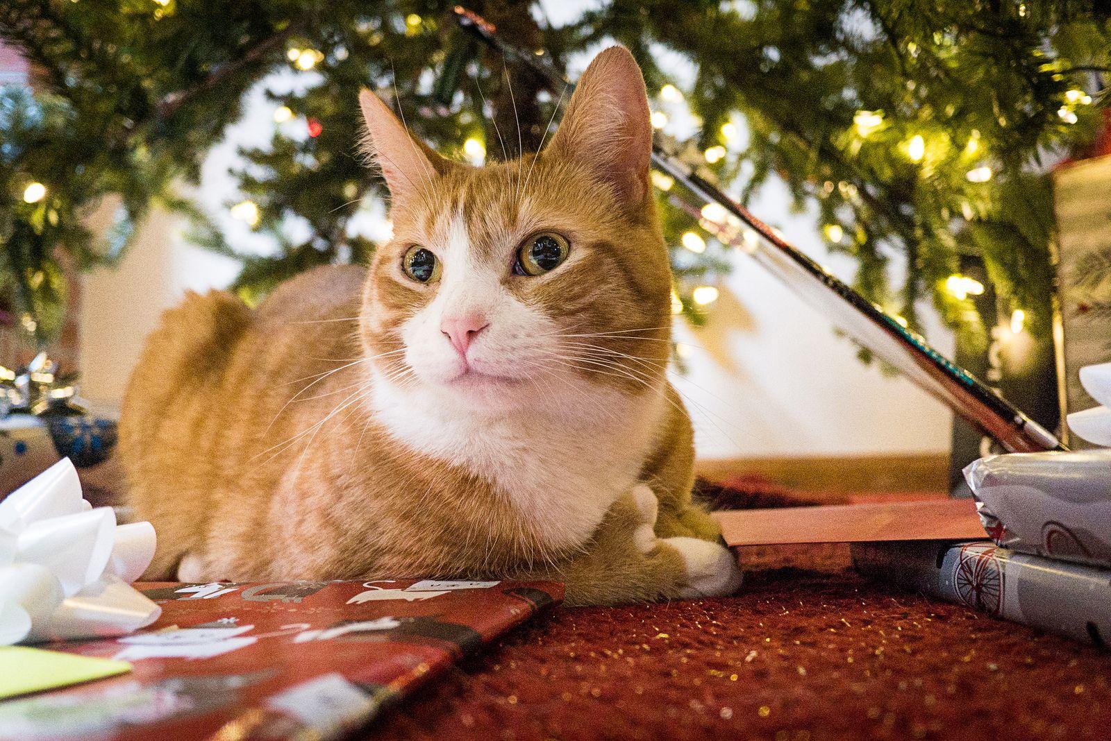 https://www.flickr.com/photos/tehchix0r/16161854256/in/pool-all_cats/