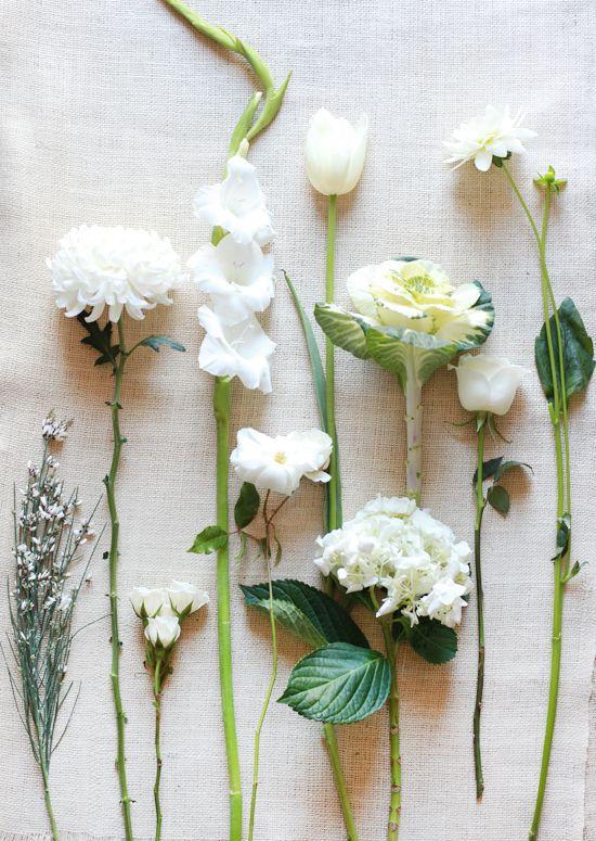 White Flower Guide Flower Guide White Wedding Flowers Wedding Flower Guide