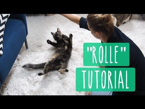 So Lernt Eure Katze High Five Katzentrick Tutorial Youtube Mit