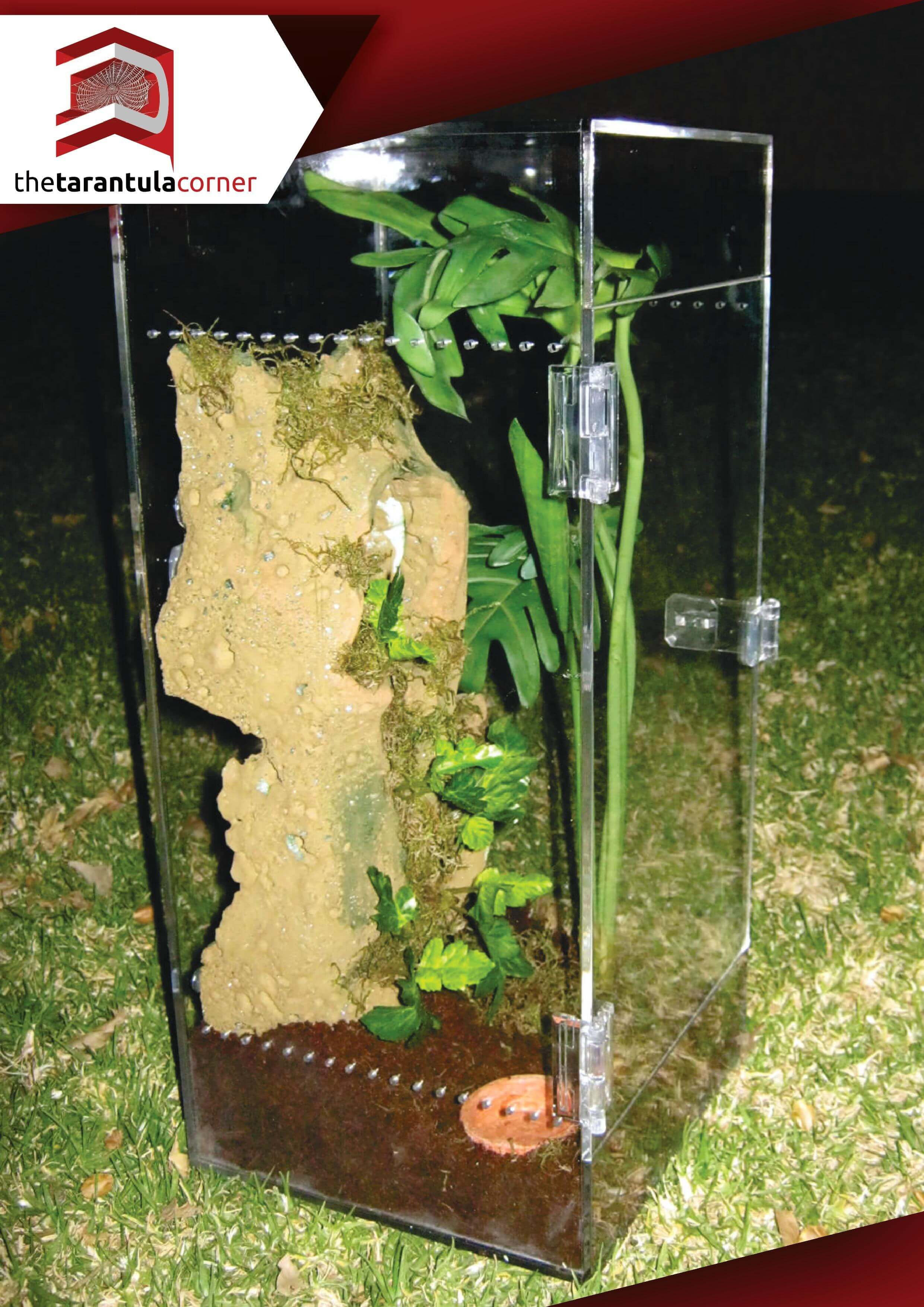 The Tarantula Corner Adult Arboreal Tarantula Terrarium Photos 0001