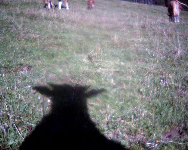 Watch susie and her friends: http://www.cowcam.ch