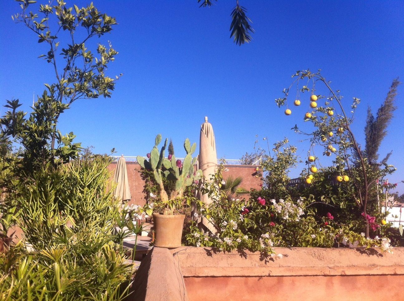 amazing blue sky of marrakesh with splendid winter sun and great