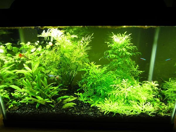 Standard 10 Gallon With Mineralized Topsoil And Black Gravel Spiral Cfl Lights Hob Filter No Heater Gu Planted Aquarium 10 Gallon Fish Tank Betta Fish Care