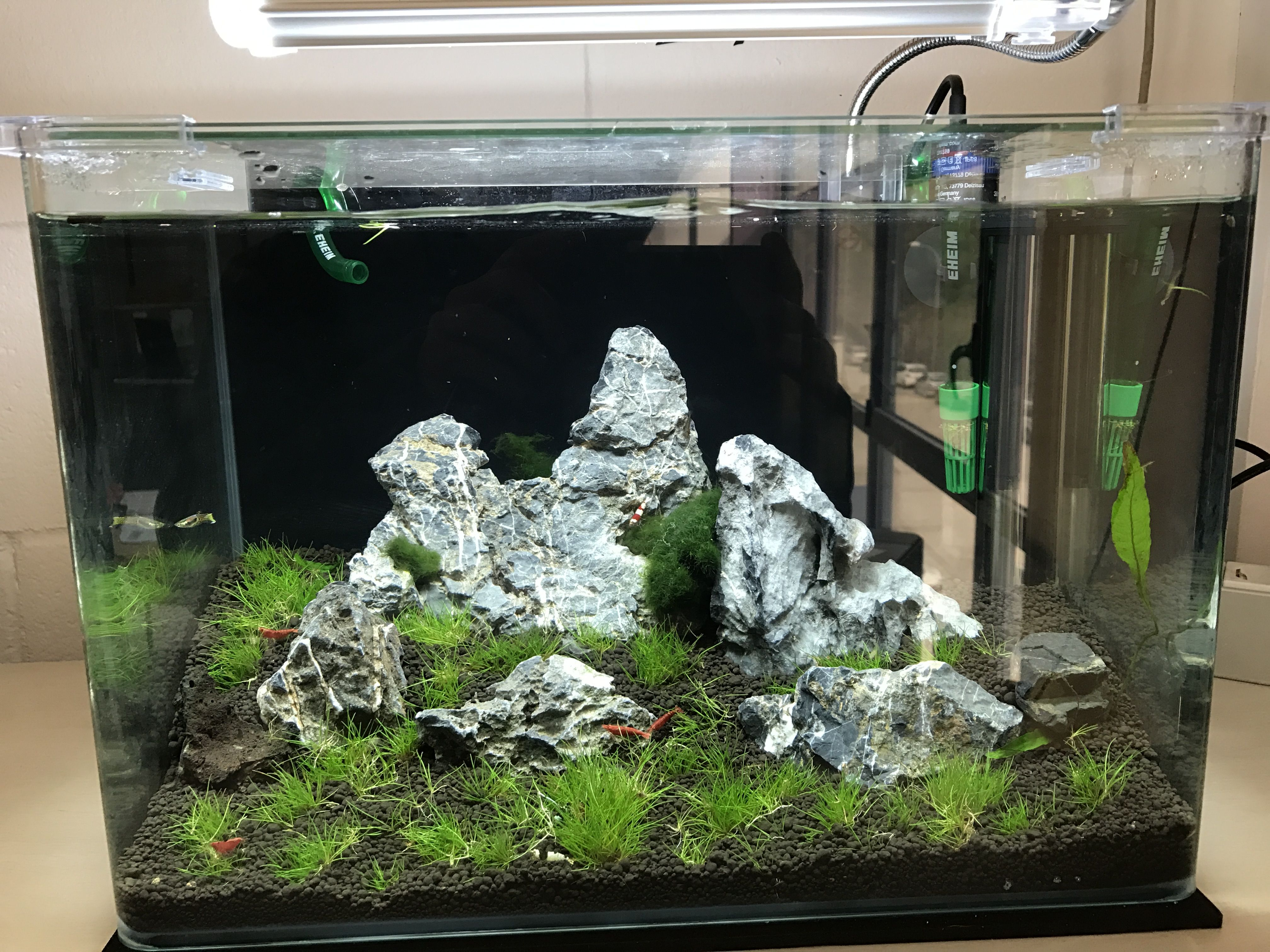 Acuario ciclidos 300 lts Aquascaping Pinterest