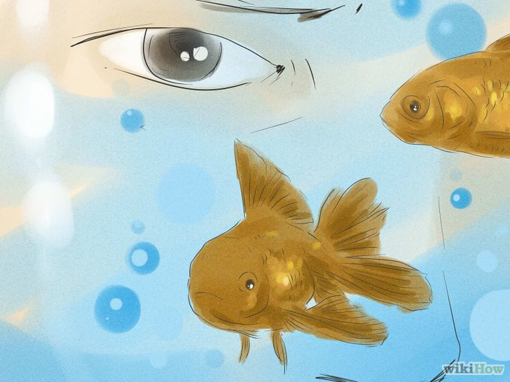 How To Tell If Your Goldfish Is A Male Or Female Goldfish Fish Pet Male