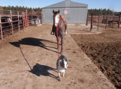 awesome! http://beefmagazine.com/people/180-photos-ranch-dogs