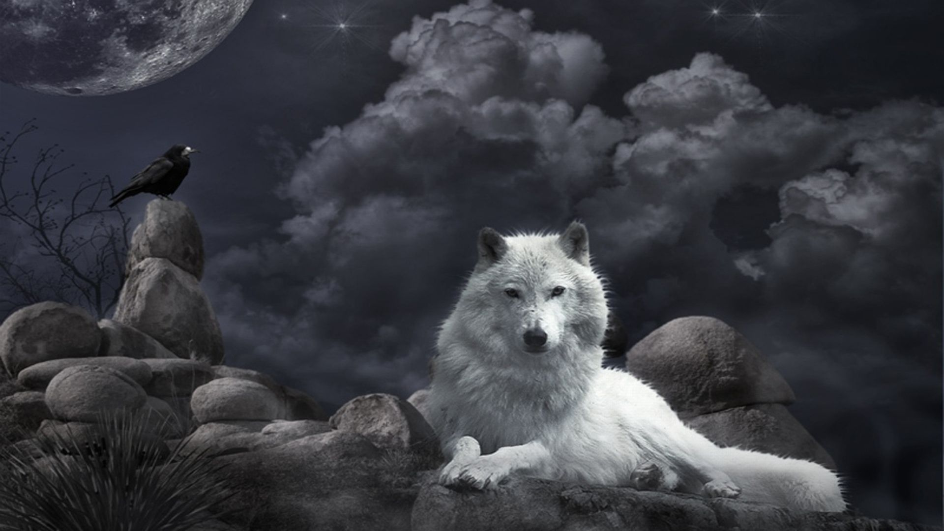 Animal Wolf Wallpaper Wolf Wallpaper Wolf Background Fantasy Wolf
