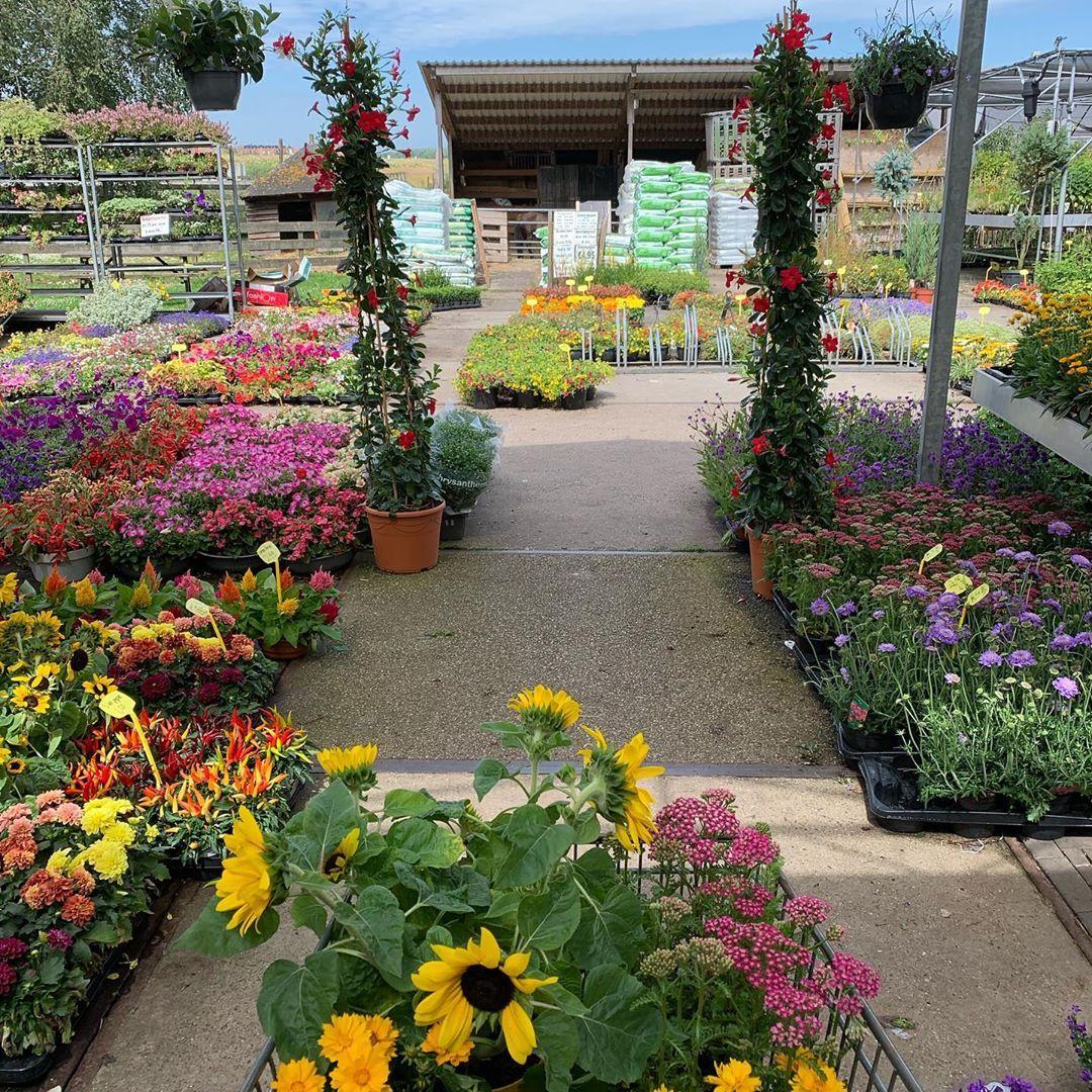 Flowerrrrr Shopping Shopping Flowers Plants Gardencentre Tuincentrum Vers Plants Garden Center Garden