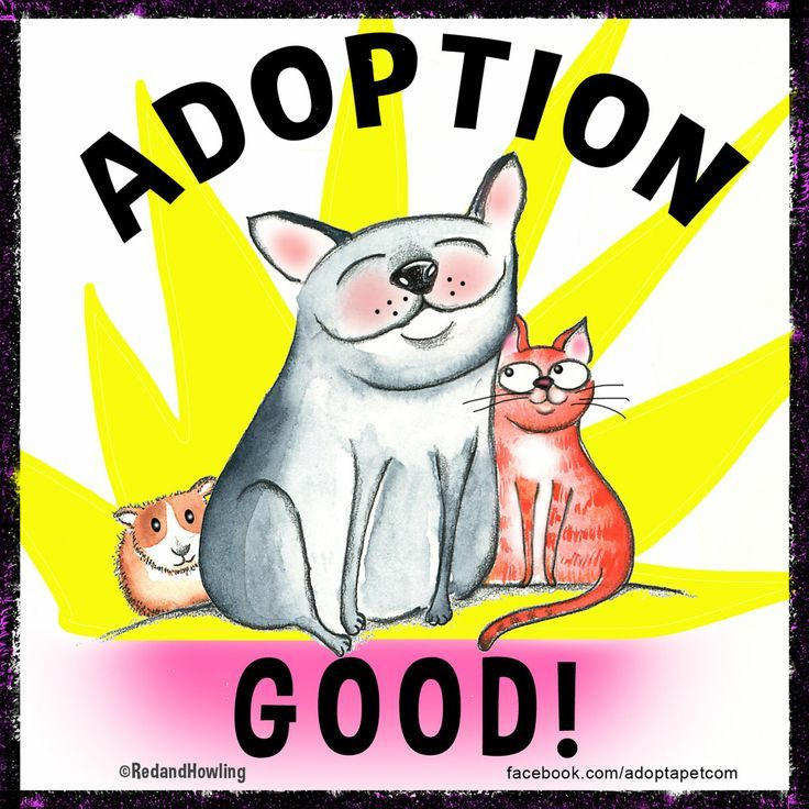 Pet adopters know this Adoption is SO good! http//www