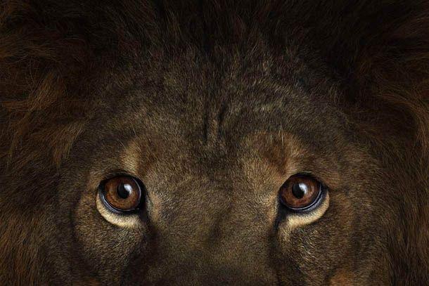 Incredible Studio Portraits Of Wild Animals By Brad Wilson: Animais Silvestres, Animais