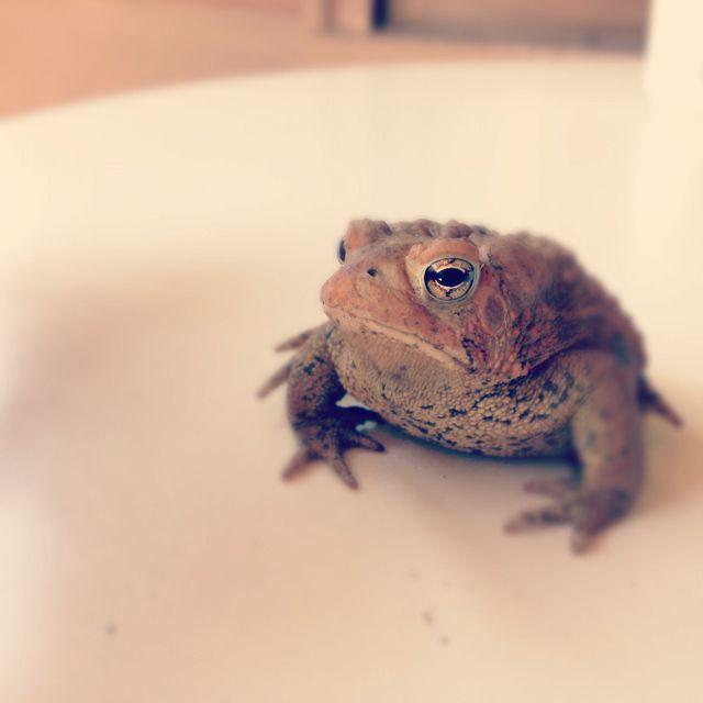 Toads just always get me.