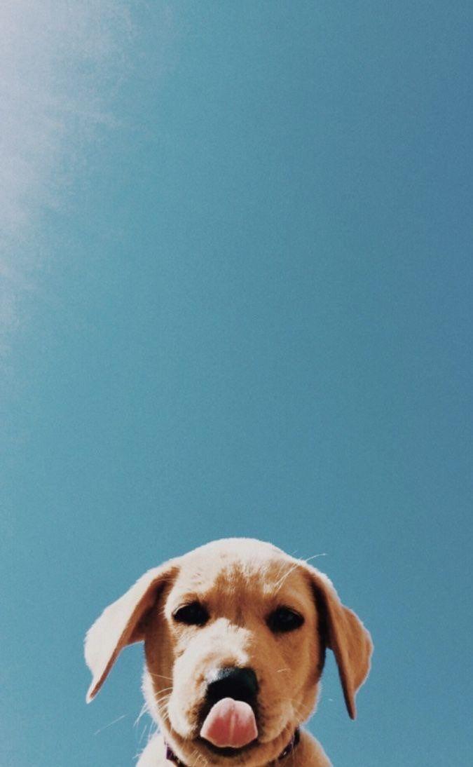 Photo of Hintergrundbilder für iPhone und Android: Cute Puppy für iPhone und Android