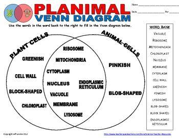 Plant Animal Cell Venn Diagram | Venn diagrams