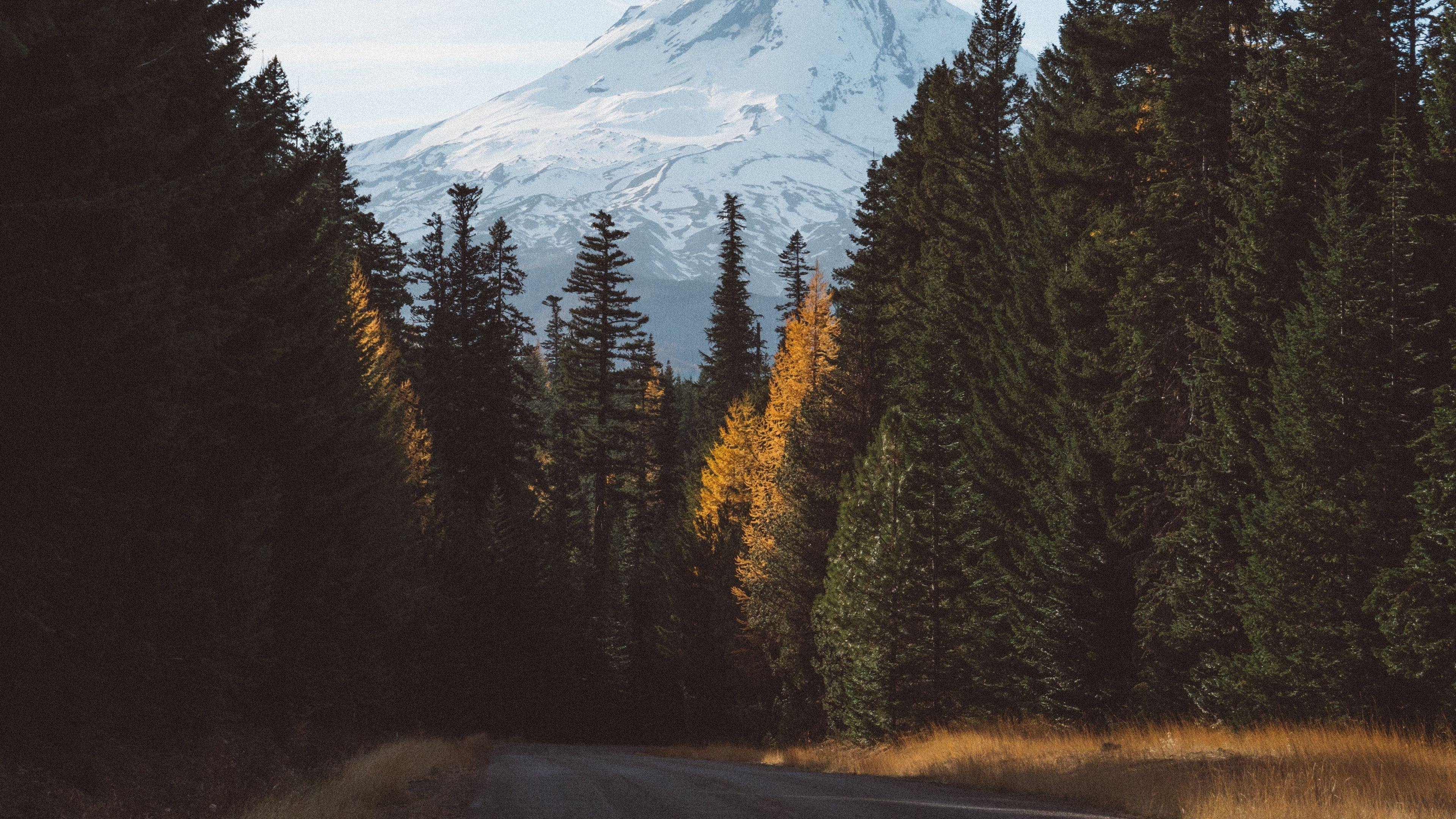Forest Mountains Road 4k Road Mountains Forest Forest Mountain Mountains Forest Hd wallpaper road turn trees mountain